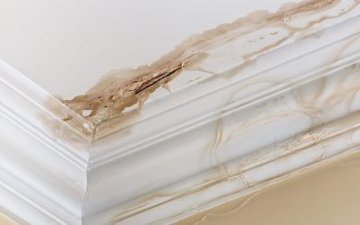What You Need to Know About Residential Water Damage